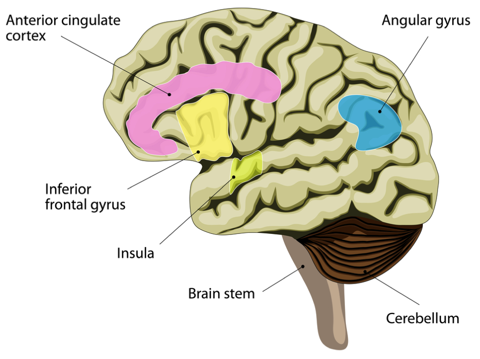 The Brain\'s of Addicts